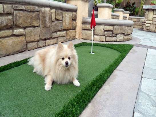 Artificial Grass Photos: Fake Grass Boronda, California Dog Grass, Backyard Ideas
