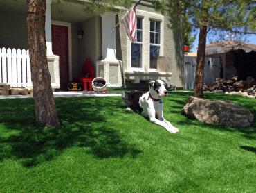 Artificial Grass Photos: Fake Turf Bodfish, California Dog Grass, Front Yard Ideas