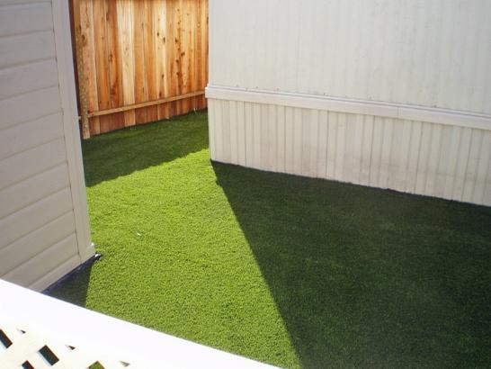 Artificial Grass Photos: Grass Carpet Mesa, California Pet Paradise, Backyard Makeover