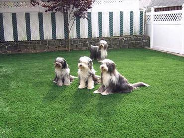 Artificial Grass Photos: Lawn Services Mesa Vista, California Backyard Playground, Backyard Landscaping Ideas