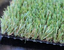 Artificial Turf Grass Safe